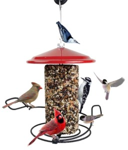 Wild Birds cardinals chickadees downy woodpecker