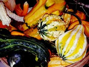 graff.gardens.&.Farm.fall.mini.gourds