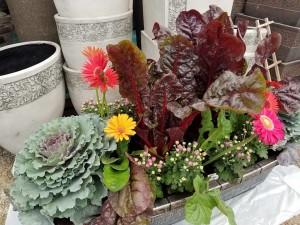 graff.gardens.&.Farm.fall.planter