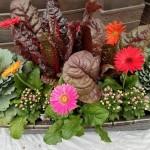 graff.gardens.&.Farm.fall.planter.1