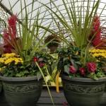 graff.gardens.&.Farm.fall.planter.2