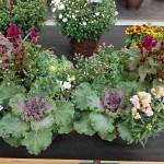 graff.gardens.&.Farm.fall.planter.3
