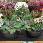 graff.gardens.&.Farm.fall.planter.4