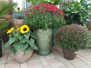 graff.gardens.&.Farm.pottery9