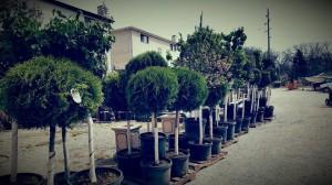 graff.gardens.new.plant.material