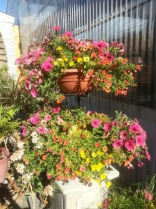 two.tier.annual.planter.graff.gardens