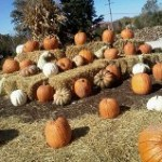 pumpkins-fall-entrance-graff-gardens