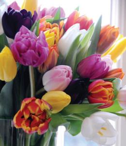 spring-tulip-bulbs-color-graff-gardens