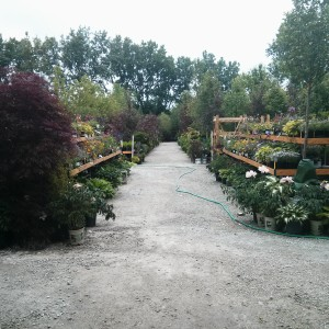 Nursery Pathway
