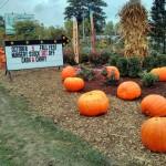 Fall-Fest-2013-entrance-graff-gardens