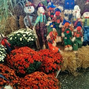 Fall-mum-display