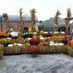 fall-fest-2013-display-3