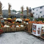 fall-fest-2013-gourds-1