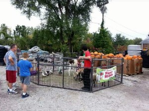 fall-fest-2013-petting-zoo