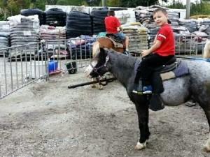 fall-fest-2013-pony-rides-2