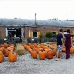 fall-fest-2013-pumpkin-patch-2