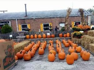 fall-fest-2013-pumpkin-patch-3