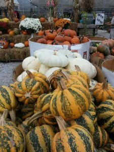 fall-fest-2013-pumpkins-2