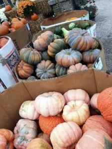 fall-fest-2013-pumpkins