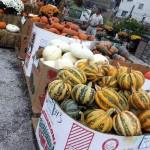 fall-fest-2013-pumpkins-3
