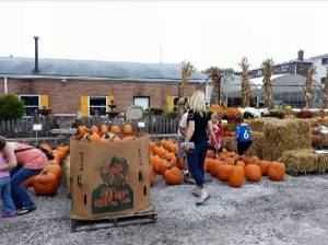 fall-fest-2013-pumpkins-51