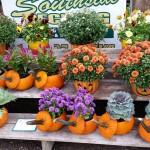 graff,gardens,&,Farm,Fall,Pumpkin,planters.3