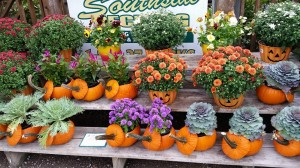 graff,gardens,&,Farm,Fall,Pumpkin,planters.3