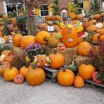 graff,gardens,&,Farm,Fall,Pumpkins