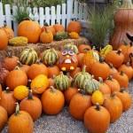 graff,gardens,&,Farm,Fall,Pumpkins10
