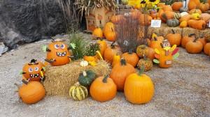 graff,gardens,&,Farm,Fall,Pumpkins,2