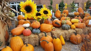 graff,gardens,&,Farm,Fall,Pumpkins3