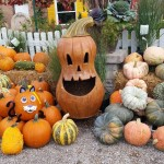 graff,gardens,&,Farm,Fall,Pumpkins5