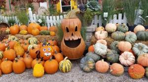 graff,gardens,&,Farm,Fall,Pumpkins5