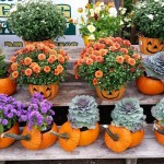 graff,gardens,&,Farm,Fall,Pumpkins6