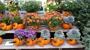 graff,gardens,&,Farm,Fall,Pumpkins6
