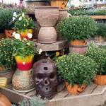 graff,gardens,&,Farm,Fall,Pumpkins7