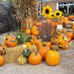graff,gardens,&,Farm,Fall,Pumpkins8