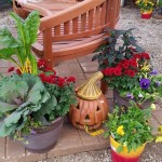 graff,gardens,&,Farm,Fall,Pumpkins,decor.