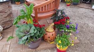 graff,gardens,&,Farm,Fall,Pumpkins,decor.