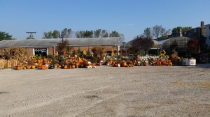 graff,gardens,&,Farm,Fall,Pumpkins,full,view
