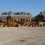graff,gardens,&,Farm,Fall,Pumpkins,full,view2