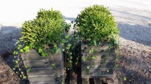 graff,gardens,&,Farm,Fall,custom,planter10