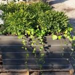 graff,gardens,&,Farm,Fall,custom,planter3