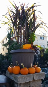 graff,gardens,&,Farm,Fall,custom,planter4