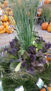 graff,gardens,&,Farm,Fall,custom,planter9