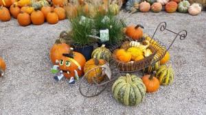 graff,gardens,&,Farm,Fall,decor2