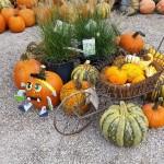 graff,gardens,&,Farm,Fall,decor6