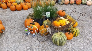 graff,gardens,&,Farm,Fall,decor6