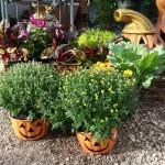 graff,gardens,&,Farm,Fall,mumkins
