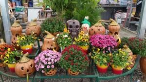graff,gardens,&,Farm,Fall,mums